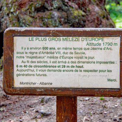 Le Gros Mélèze Montricher-Albanne